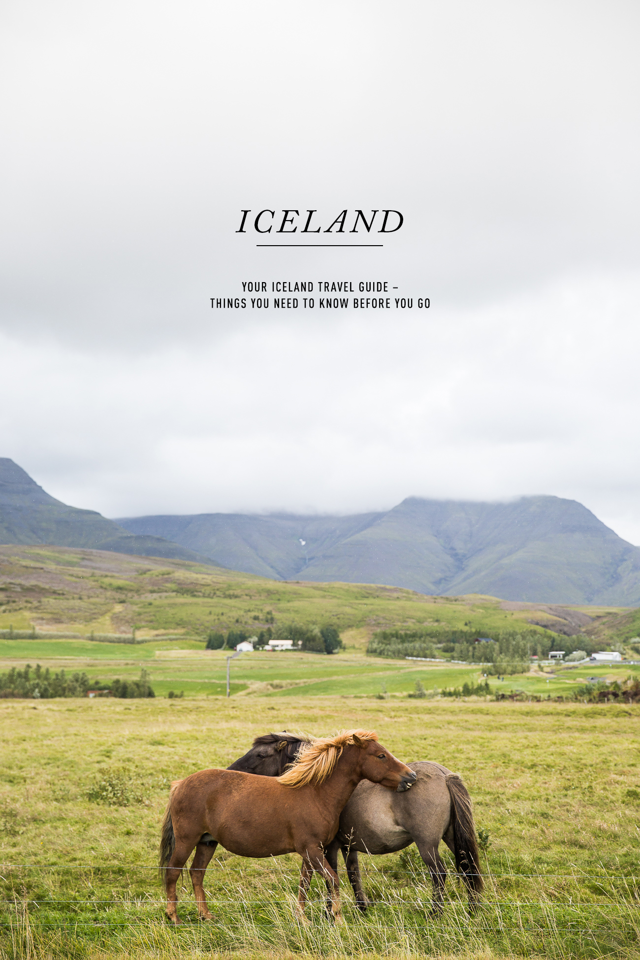 Beautiful Icelandic Horses – What to know before you go to Iceland / See and Savour