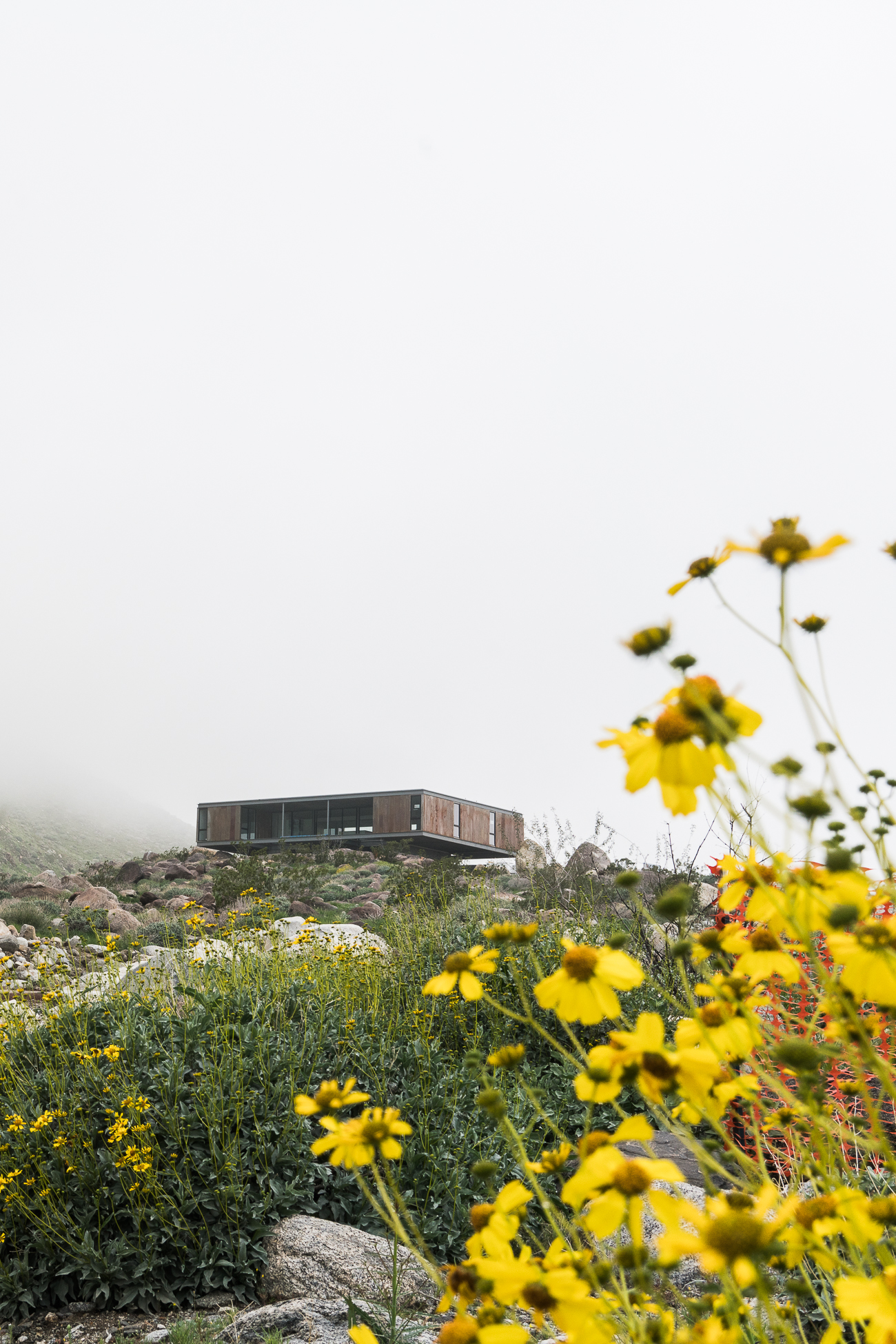 Al Beadle House - Chino Canyon Project / See and Savour