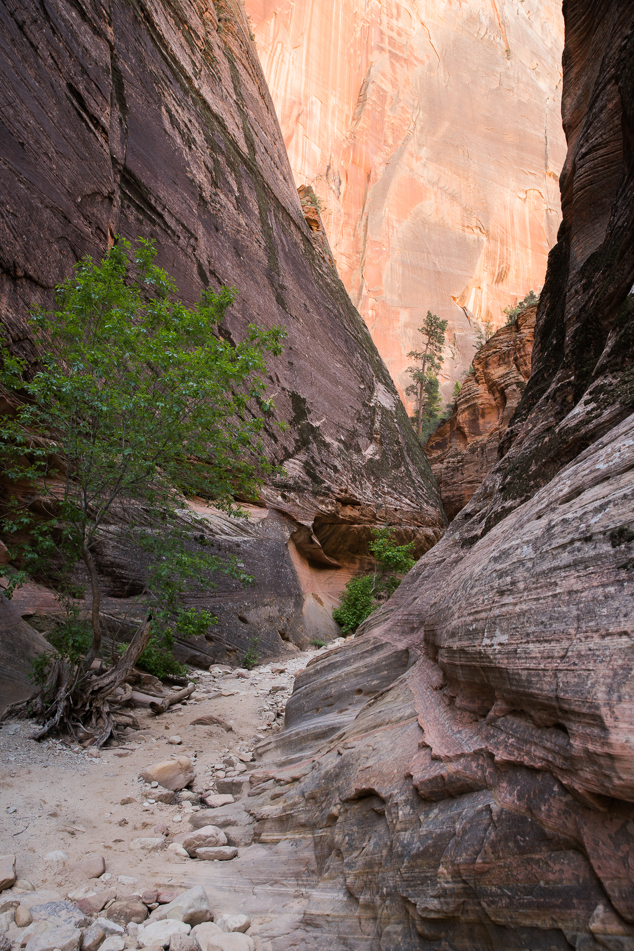 Discover Zion National Park / See and Savour