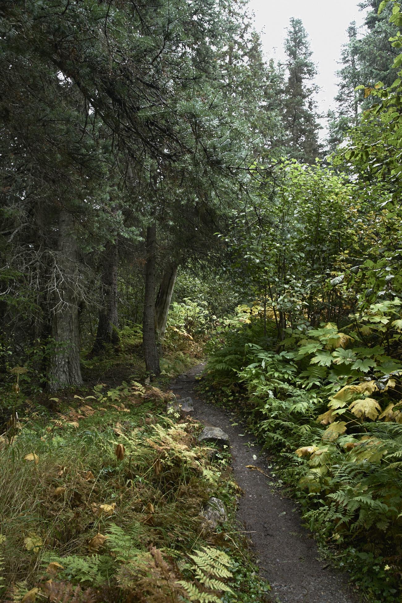 Shore excursions - Skagway Alaska, Hiking, Helicopter, White Pass & Yukon Route Railroad /