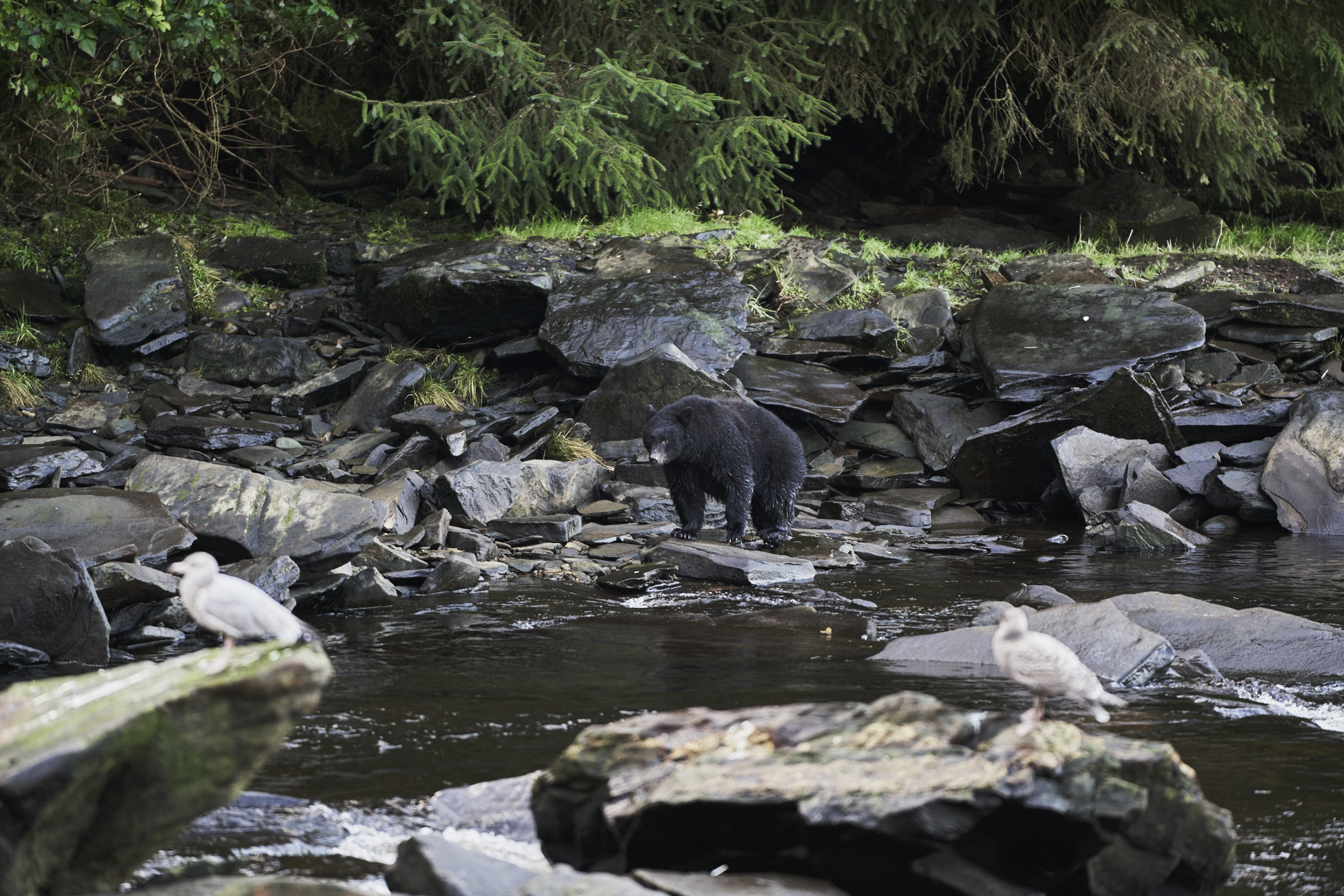 Neets Bay Creek Ketchikan - Alaskan Cruise- Shore Excursions / See and Savour